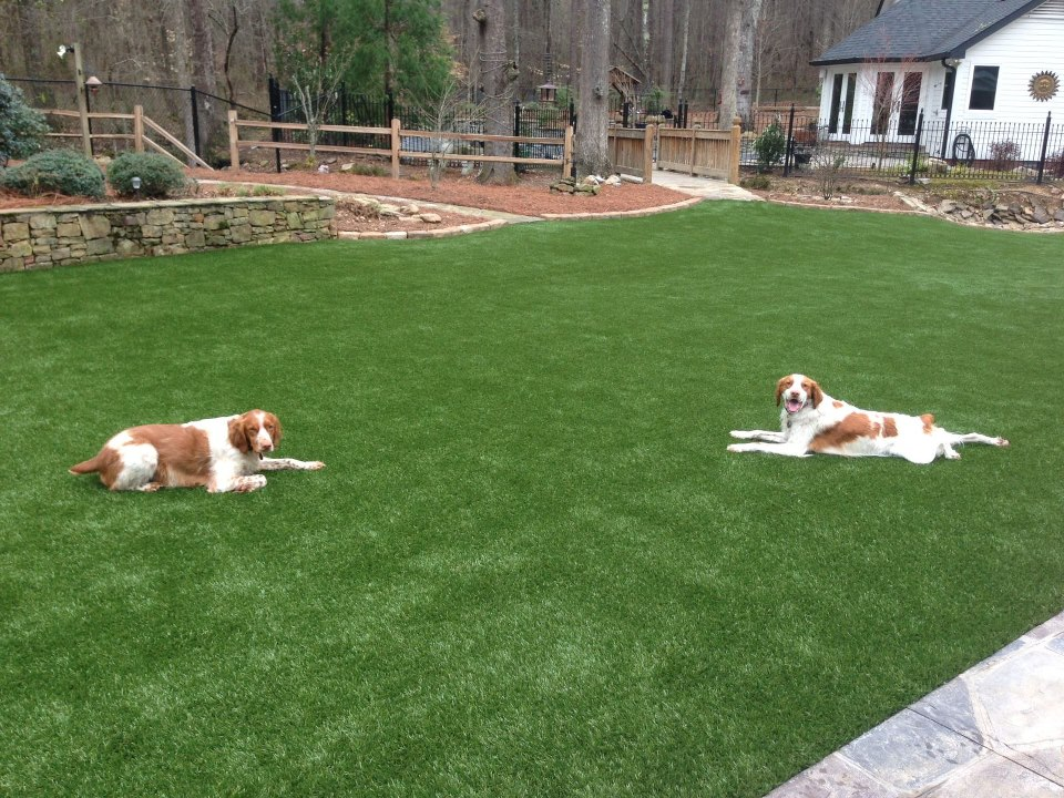 SoftLawn® Pet Turf | Fake Grass for Dogs | Synthetic Turf ...