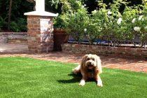 K9 Dogs Grass Pet Turf Synthetic Turf International