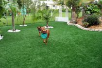 Synthetic Turf International K9 Dogs Grass Pet Turf