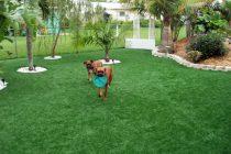 Synthetic Turf International K9 Dogs Grass Pet Turf