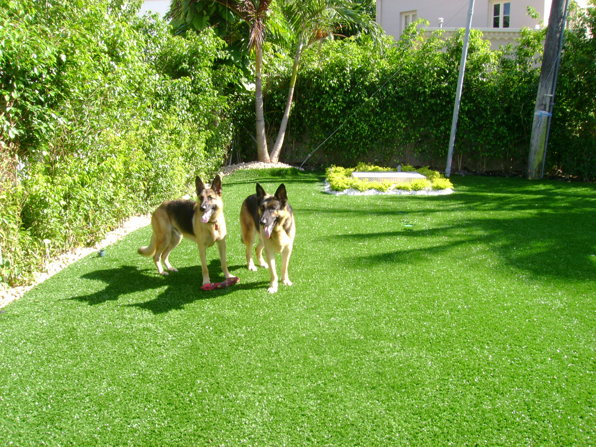 Softlawn Pet Turf Fake Gr For Dogs Synthetic International