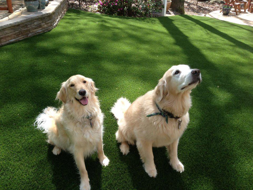 Softlawn 174 Pet Turf Artificial Grass For Pets Synthetic