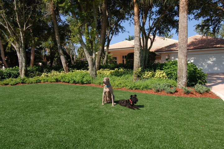 South Florida Synthetic Gr Lawn Superb Turf